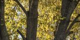 A Golden Fall