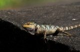 Lizards, snakes and frogs of Vietnam