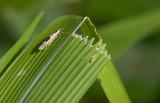 Moths of Vietnam