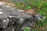 Mammals of Vietnam