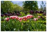 Jardin de l'Arquebuse - DIJON