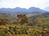 Baliem landscape