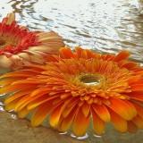 Montecito Inn Flower Fountain.jpg