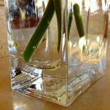 Montecito Inn Vase.JPG