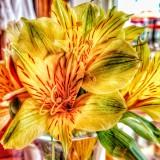 Los Arroyos Flower.JPG