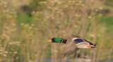 Ojai Meadow-5585.jpg