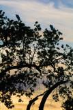 Ojai Meadow-5879.jpg