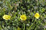 74 Yellow-wild-flowers