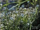 134 Blue flowers