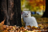 Nov1_16_430.jpg