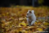 Nov19_16_361.jpg