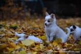 Nov19_16_244.jpg