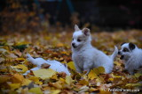 Nov19_16_245.jpg