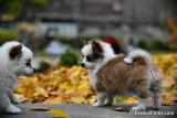 Nov19_16_260.jpg