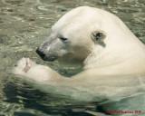 The Toronto Zoo 01715 copy.jpg
