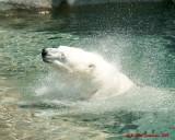 The Toronto Zoo 01730 copy.jpg