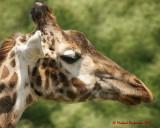 The Toronto Zoo 01959 copy.jpg