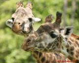 The Toronto Zoo 01991 copy.jpg