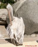 The Toronto Zoo 01997 copy.jpg