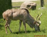 The Toronto Zoo 02051 copy.jpg