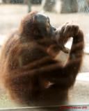 The Toronto Zoo 02104 copy.jpg