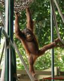 The Toronto Zoo 02113 copy.jpg