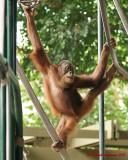 The Toronto Zoo 02115 copy.jpg