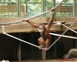 The Toronto Zoo 02119 copy.jpg