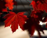Leaf Peeping 2014