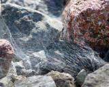 Spider Webs 07662 copy.jpg