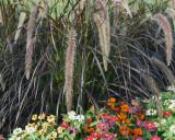Flowers 08561 copy.jpg