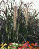 Flowers 08564 copy.jpg
