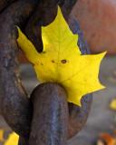Leaf Peeping 2015