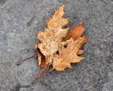 Leaf Peeping 2016