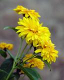 Flowers 2357 copy.jpg