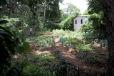 A back yard garden of a tea picker family