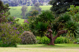 Garden at Kiambethu Farm
