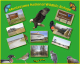 The National Montezuma Wildlife Refuge & Wetland Complex