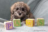 Puppies 4.2014