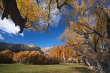 Sierra autumn