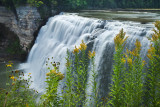 Golden rods and waterfall