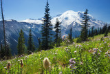 Mt Rainier summer