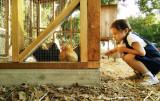 At the chicken den