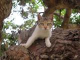 2015_04_18 Cats Chillin around Lima