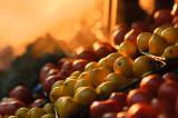 Fruit in Late Light
