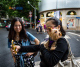 Dog's are loved in Shanghai. CZ2A5505.jpg