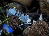 Butterflies massing at some rare moisture in the desert. CZ2A8357.jpg