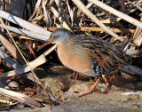 Sora's & Virginia's Rails