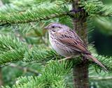 Sparrow Lincolns D-202.jpg