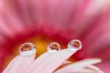 Reflecting water drops